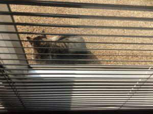 また今年もネズミがカチカチ鳴いてるニャ。 でも食えないニャ。
